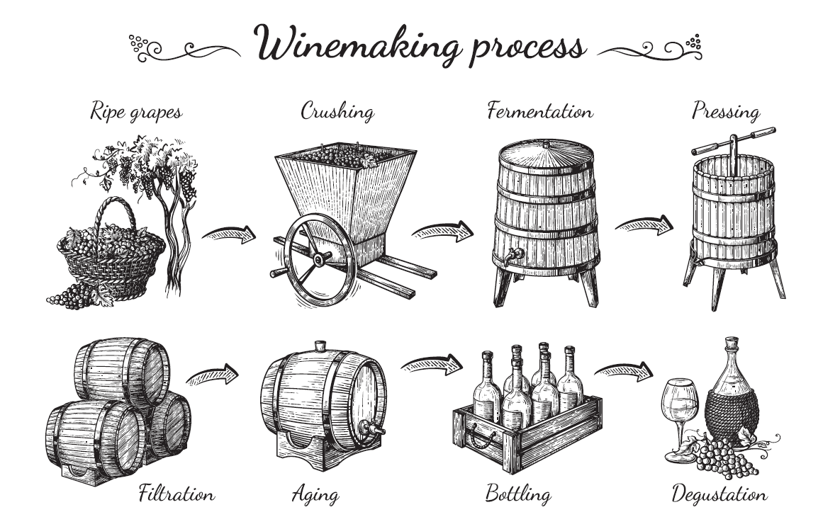 how wine is made graphic